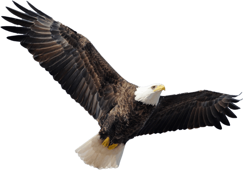 Bild eines Adlers